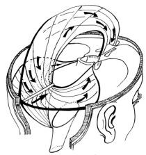 Cranial diaphragms