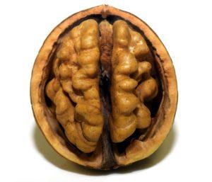 walnut-300x257